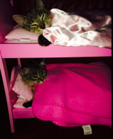 Kitty bunks