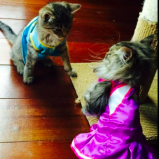 Kittens in dresses