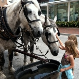 Horses in Savannah